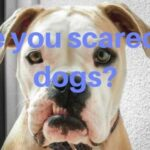 Are you scared of dogs ?