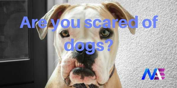 Are You Scared of Dogs? Then You Will Relate to This