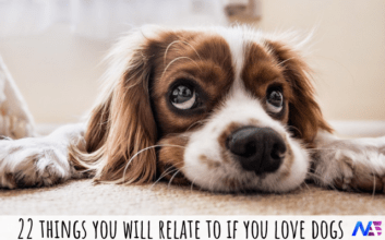 things you will relate to if you love dogs