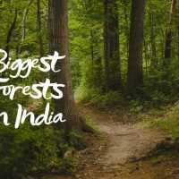 13 Biggest Forests in India That Teach Us About Biodiversity