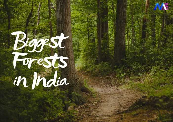 Biggest Forests in India - moodswag