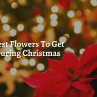 The Best Flowers To Get During Christmas